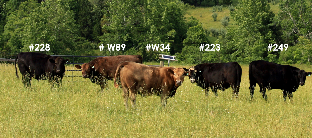 Five of our six steer for 2011